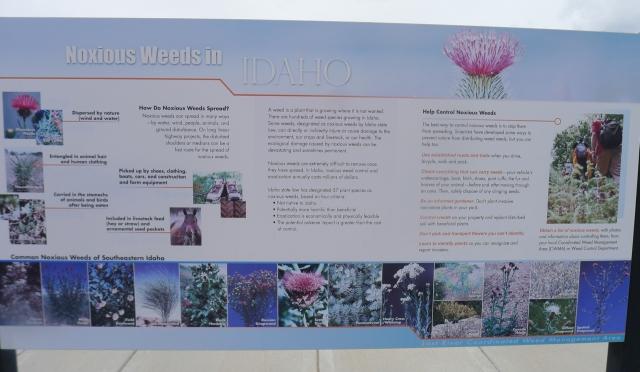 Atomic city weeds notice