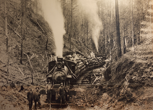 logging photo