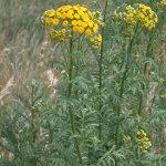 weed-id-5106049-150x150.jpg
